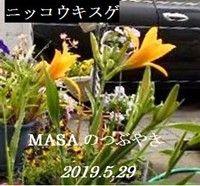 s-2019-05-29_115635