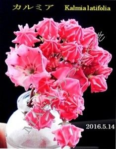 s-2016-05-16_072539