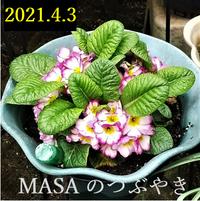 2021-04-03_111948
