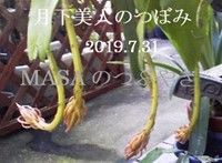 s-2019-07-31_203513