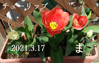 2021-03-17_165528