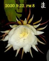 2020-09-23_063616