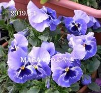 s-2019-04-02_092926