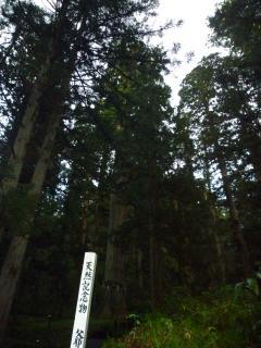 pict-羽黒山・表参道・天然記念物・爺杉