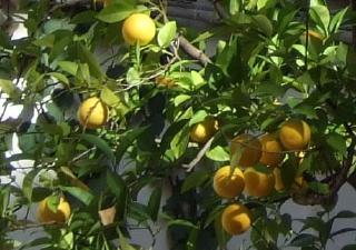pict-智子撮影スペイン(2)052オレンジ