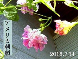 s-2018-07-15_063939