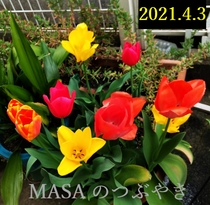 2021-04-03_103817