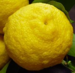 pict-柚子-2