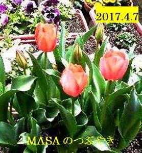 s-2017-04-07_165137
