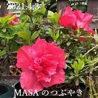 s-2021-04-03_114200