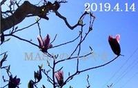 s-2019-04-13_165956