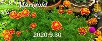 s-2020-09-30_112545
