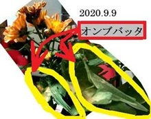 s-2020-09-10_170145
