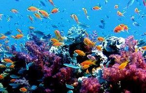 s-サンゴ礁-2