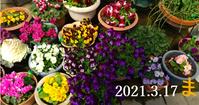 2021-03-17_165041