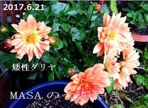 s-2017-06-21_163532