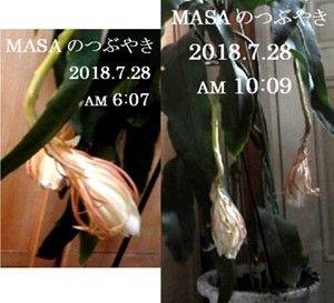 s-2018-07-28_134947
