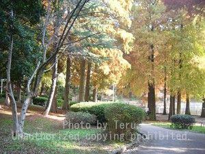 桃山公園コピー