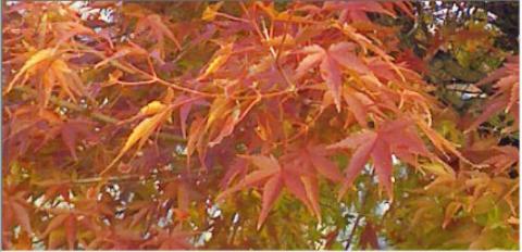pict-秋・紅葉