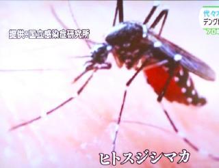 pict-ヒトスジシマカ-11