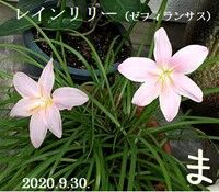 s-2020-09-30_122113