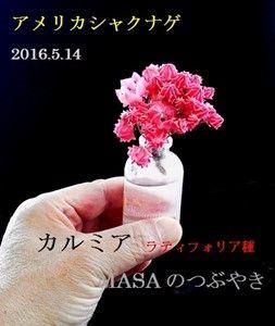 s-2016-05-16_090127