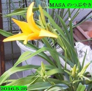 s-2016-05-25_131752