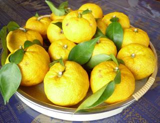 pict-P1060437柚子
