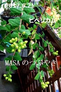 s-2017-06-21_163146