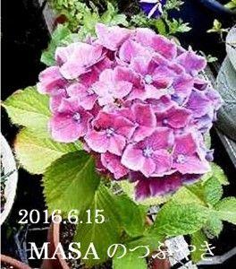 s-2018-06-20_071614