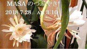 s-2018-07-28_110322