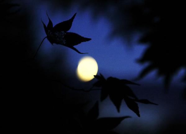 月にもみじ