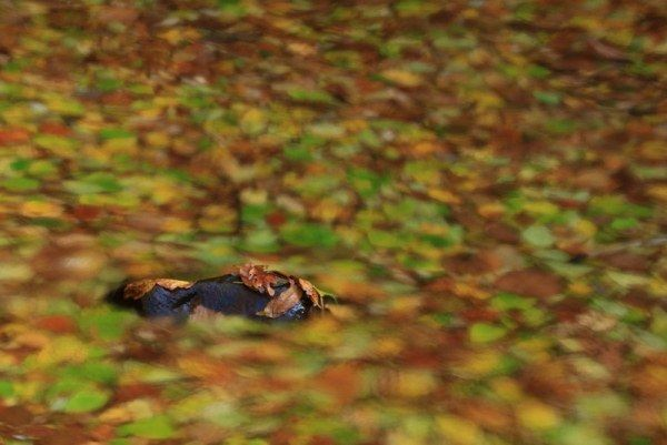 落ち葉の川