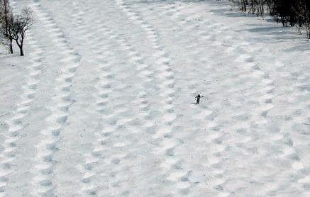 春スキーの醍醐味コブを滑る