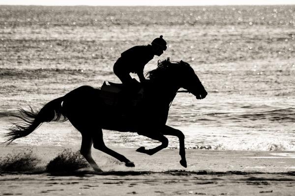 疾走する馬