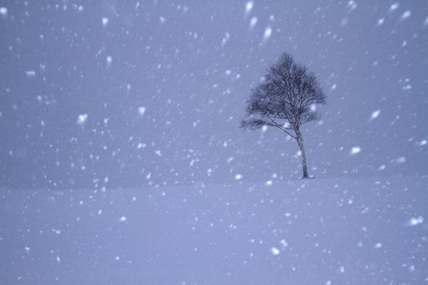 吹雪きの一本木