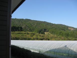 家から眺める緑の木々