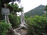 高盤岳展望所からの眺め