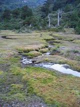 小花之江河
