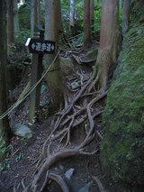 木の根が露出した遊歩道