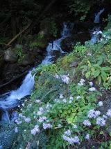 水の流れと花