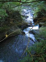 渓流沿いコースの眺め2