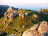 山頂付近の景色