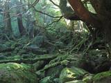 白谷雲水峡3