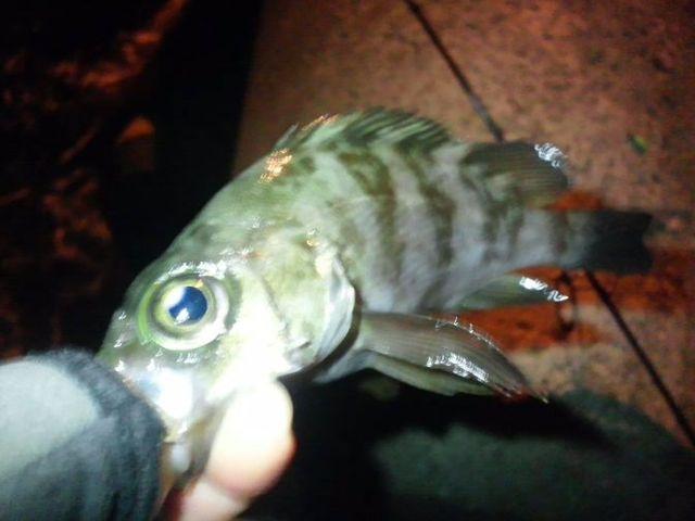 DSC_1890福岡アジング・メバリング釣りブログ用写真