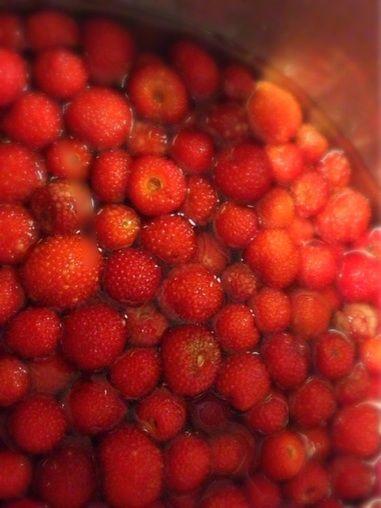 こちらが、今回の収穫分。時期が早いのか、フレッシュなイチゴが多かったです... 福岡を釣る、福岡