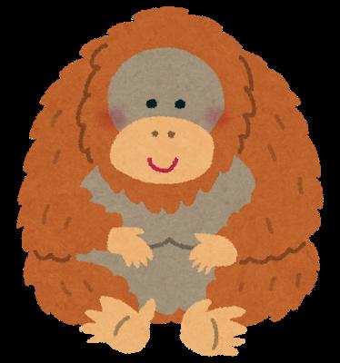 animal_Orangutan
