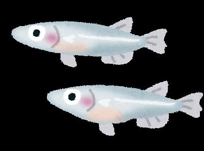 fish_medaka
