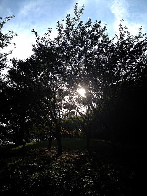 2012-08-28 11:58:02 写真1