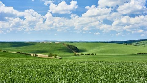 丘と草原と青空